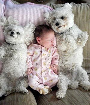 Pet dá alergia em bebês?